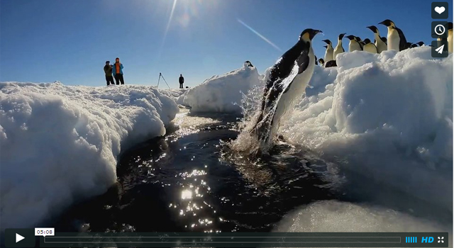 南極 皇帝ペンギン
